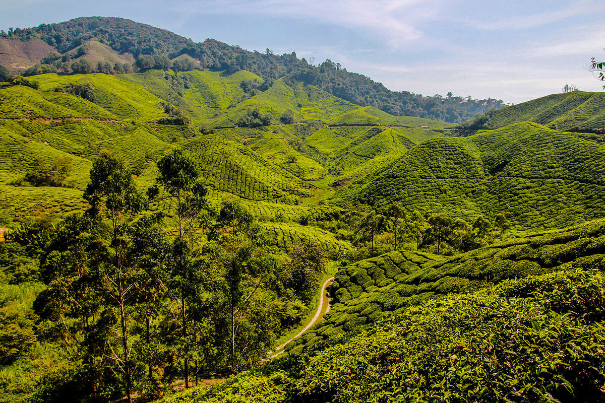 Tea plantation on hilly terrain - Photo © Arne Müseler / arne-mueseler.de / CC-BY-SA-3.0